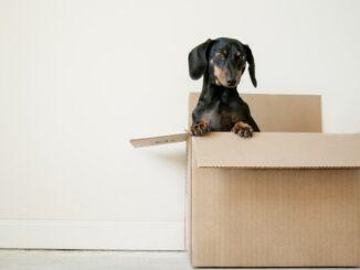 papkasser-raja-package-dog